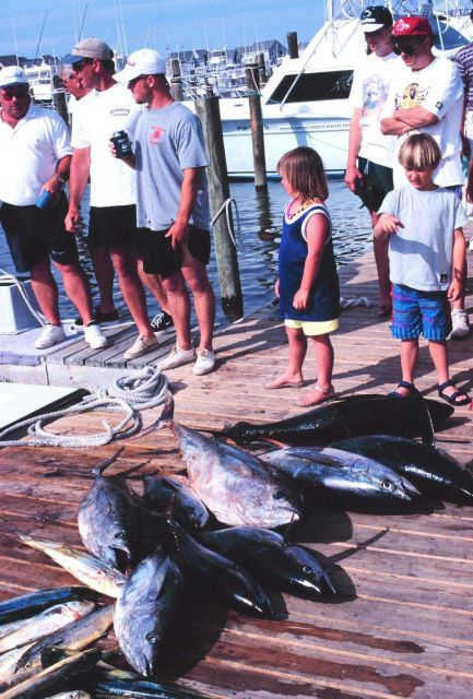 A charter boat unloads a catch of yellowfin tuna and dolphinfish Picture