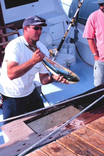 Unloading dolphinfish from a charterboat Picture