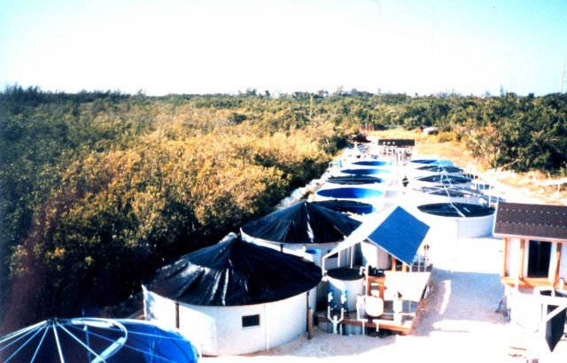 Aerial view of mutton snapper nursery/hatchery complex Picture