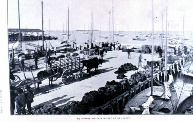The sponge auction wharf at Key West Picture