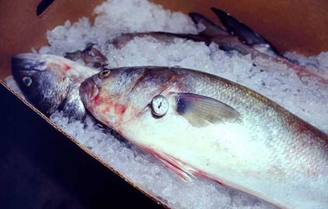 Bluefish fresh off the boat are given a temperature check as part of a Baltimore plant's HACCP inspection plan. Picture
