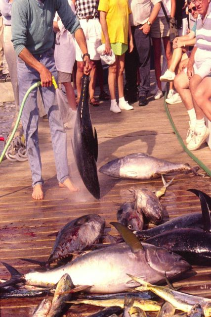 A charter boat crewman cleans tuna and dolphin on a dock in Manteo, North Carolina. Picture