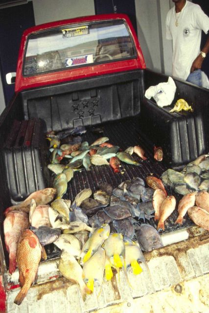 Small snapper, grouper, and parrotfish are sold from the back of a truck in St Picture