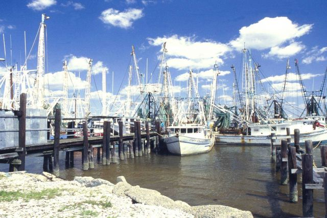 Mississippi shrimp boats, like these in Biloxi, are often identical to those of Louisiana and Texas. Picture