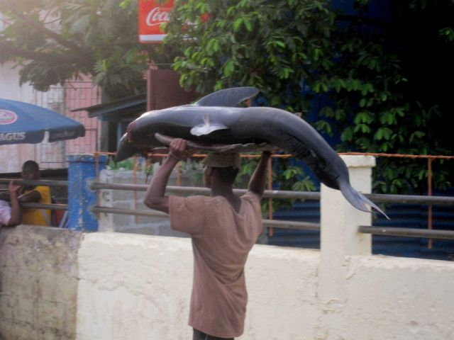 Shark being carried to the market Picture