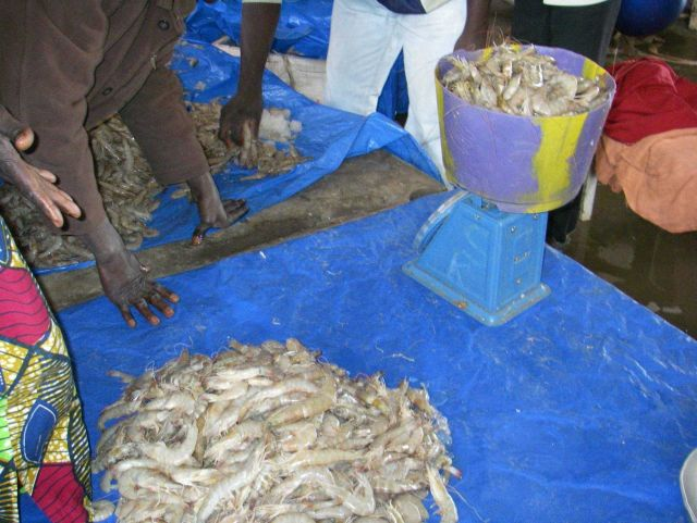Fresh shrimp at the Central Fish Market at Dakar. Picture
