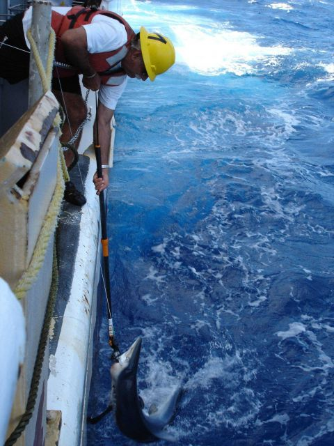 Longline fishing research on the NOAA Ship OSCAR ELTON SETTE Picture