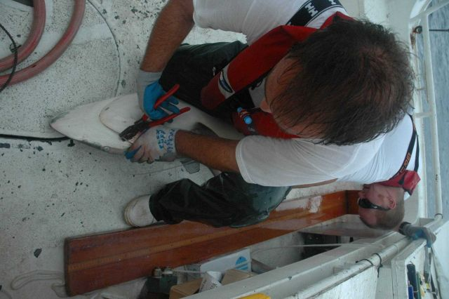 Removing hook from medium size shark on the NOAA ship GORDON GUNTER. Picture