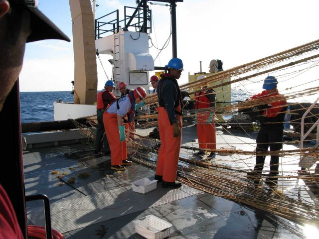 Hauling in Aleutian wing trawl during sperm whale predation survey Picture