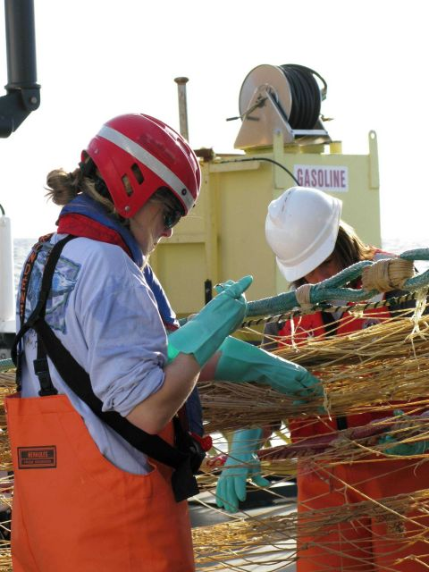 Hauling in Aleutian wing trawl during sperm whale predation survey - picking small organisms adhering to net for further study. Picture