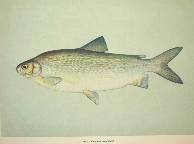 Plate 69 Picture