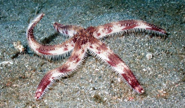 A starfish. Picture
