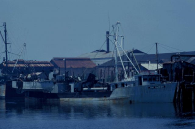 Porgy fishing boat Picture