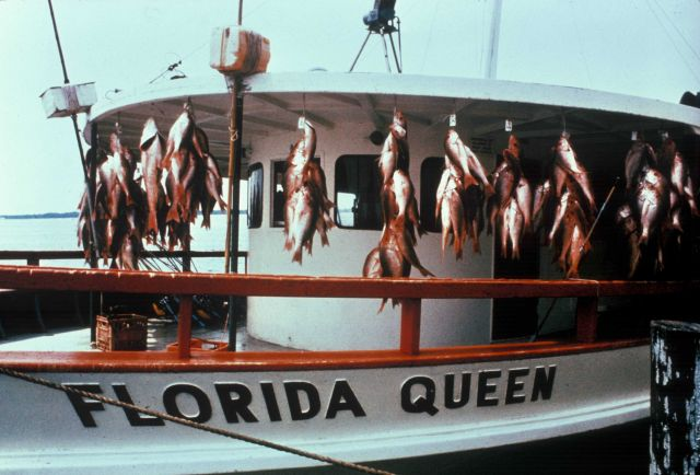 Party boat with a snapper catch Picture