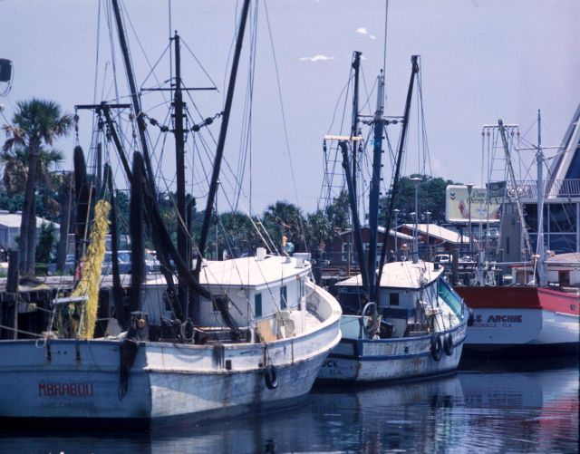 Shrimp boats tied up on Florida east coast. Picture