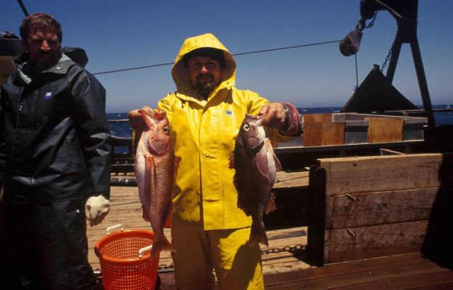 Rockfish caught during research cruise. Picture