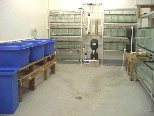 Indoor aquarium system for ornamental fish culture. Picture
