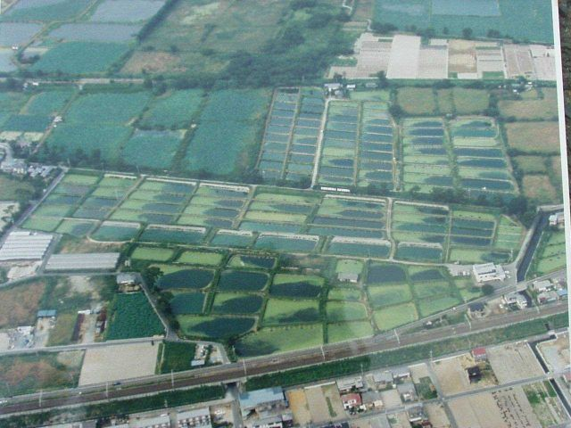 Aerial view of Hattori-Nakamura Soft-shelled Turtle Farm. Picture