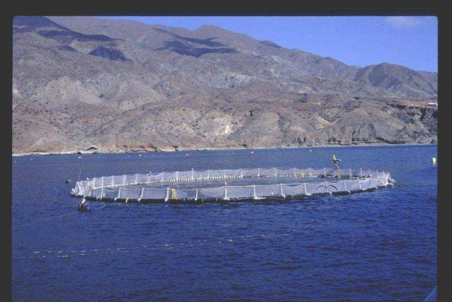 Netpen being used for experimental project on raising bluefin tuna. Picture