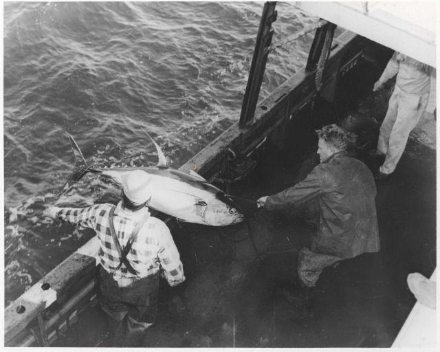 Landing 120-lb yellowfin tuna on board the FWS research vessel OREGON Picture