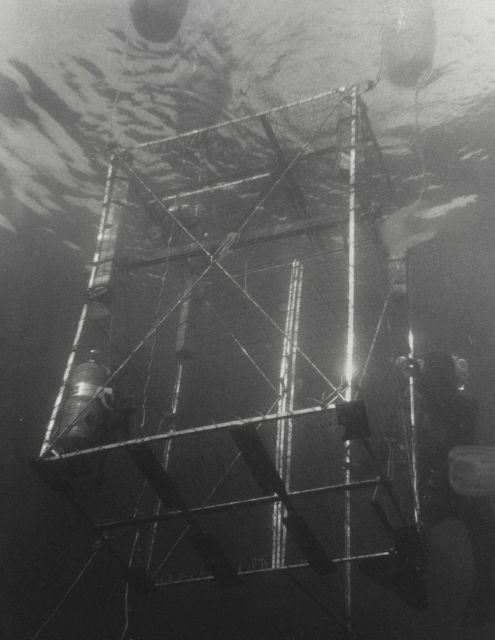 Diver biologist entering shark cage from sport fishing boat. Picture