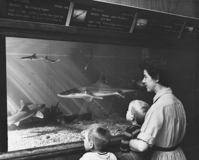 Family enjoying the aquarium at the Woods Hole BCF Laboratory Picture