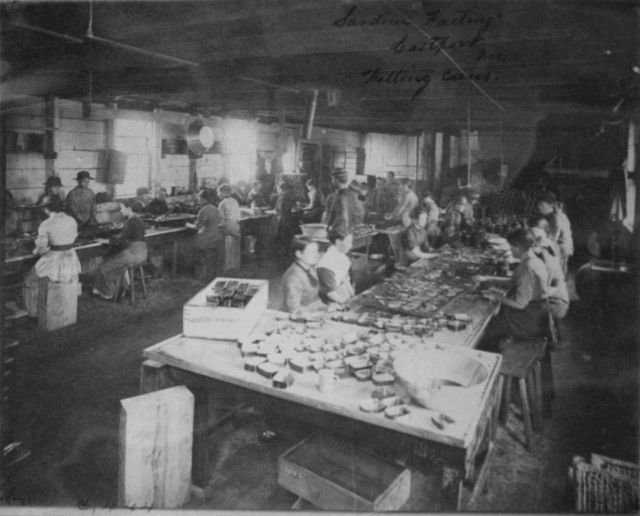 Sardine factory, Eastport, ME, filling cans. Picture