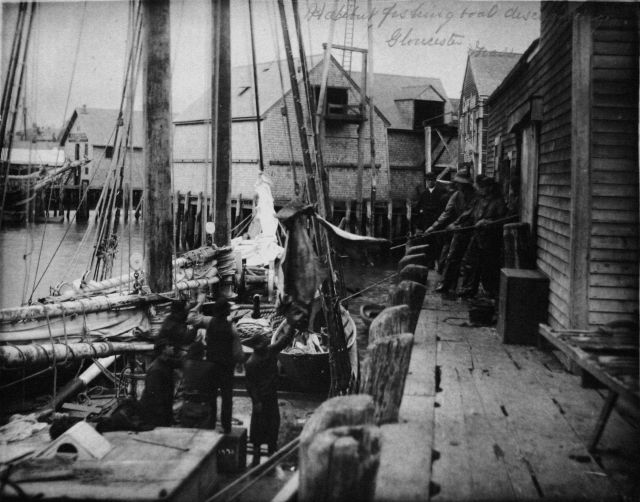Halibut fishing boat discharging, Gloucester, MA. Picture