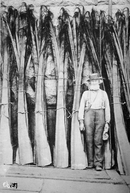 Whale slabs of white bone in warehouse at New Bedford, 1902. Picture