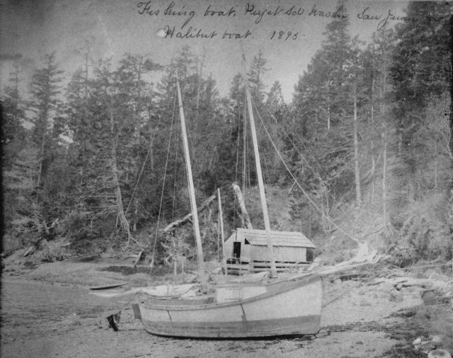 Fishing boat Puget Sound, WA, San Juan Ids., halibut boat, 1895. Picture