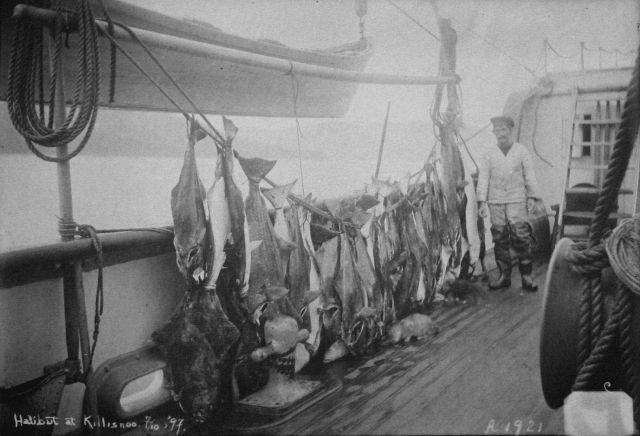 Albatross cruise 1897 Picture