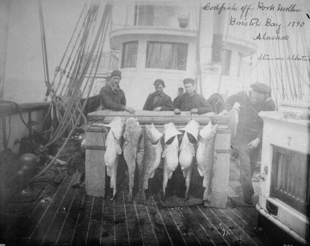 Codfish off Port Moller, Bristol Bay, AK, 1890, steamer Albatross. Picture