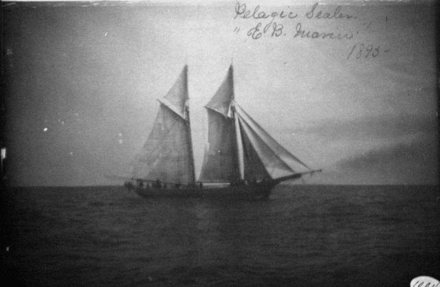 Pelagic sealer E.B Picture