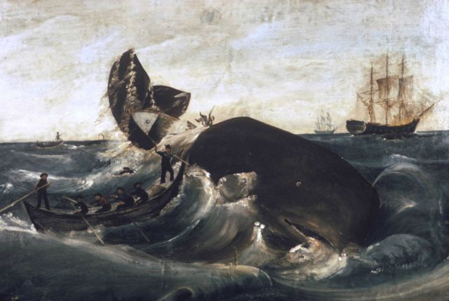 Capturing a sperm whale, third quarter, 19th century Picture