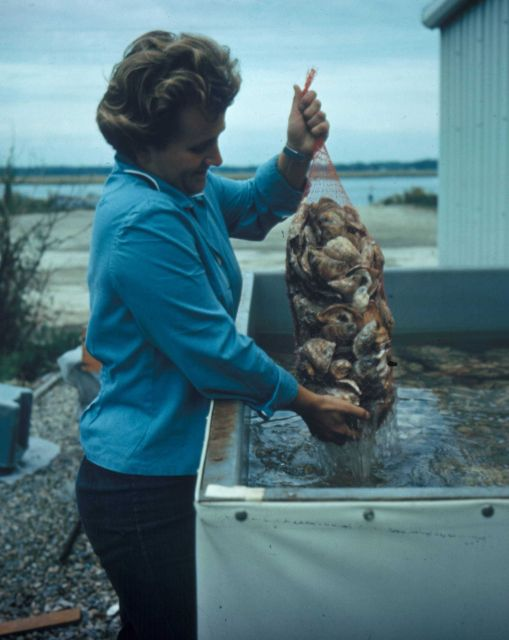 Aquaculture has the potential to meet a large part of the demand for certain fishery products Picture