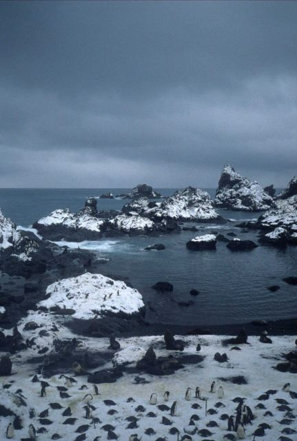 Antarctic fur seals and chinstrap penguins congregate at a rocky inlet on Seal Island Picture