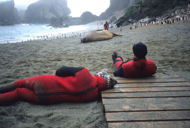 Relaxing at the Seal Island field camp with a female southern elephant seal. Picture