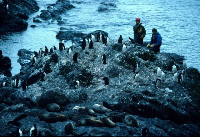 Penguins and seals share coastal real estate, while researchers observe. Picture