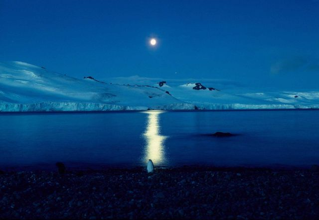 Full moon over Admiralty Bay.The reflection silhouettes a lone penguin. Picture