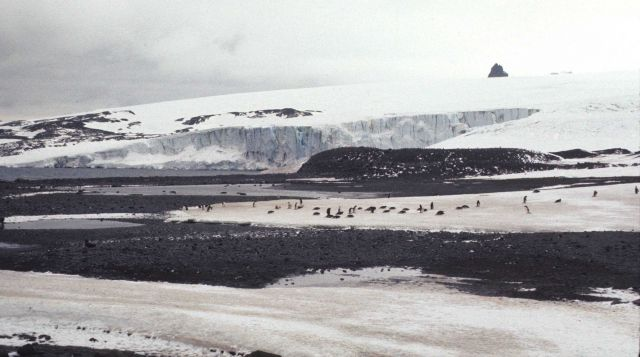 A group of Adelie penguins at King George Island in 1977. Picture