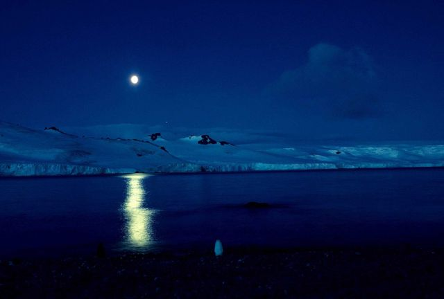 A lone chinstrap penguin stands in the moonlight in Admiralty Bay on King George Island. Picture