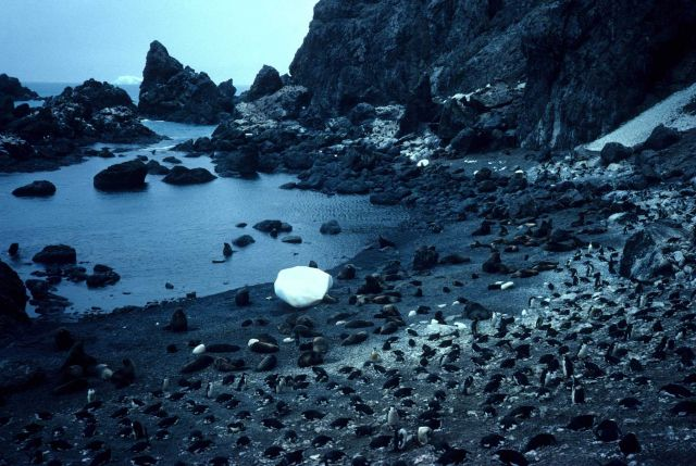 Fur seals and chinstrap penguins congregate around a rocky inlet on Seal Island, in the South Shetland Islands. Picture