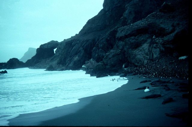 Chinstrap penguins and elephant seals share the beach at Seal Island. Picture