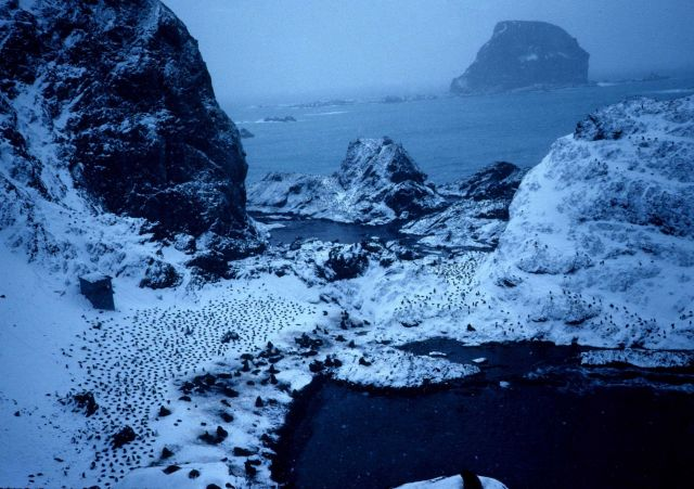 A seaside colony of penguins at Seal Island in 1991. Picture