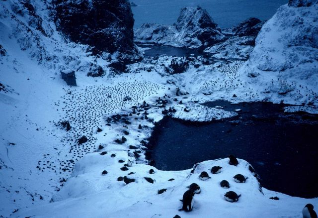 An Adelie penguin colony, with an observation shack visible in the distance . Picture