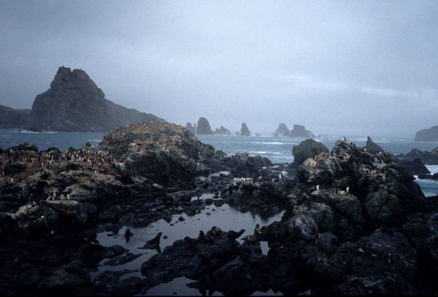 Penguins and seals around a rocky cove at Seal Island, 1991. Picture