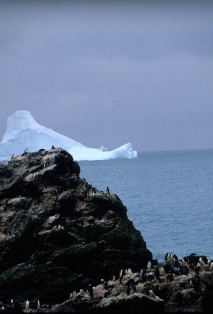 A cliffside colony of chinstrap penguins at Seal Island. Picture