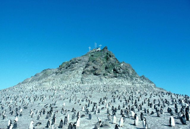 A penguin colony near a weather station, Seal Island. Picture