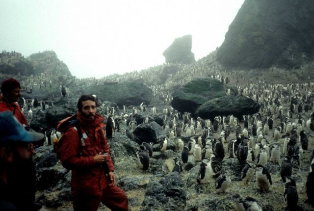 A biologist at a chinstrap penguin colony on Seal Island. Picture