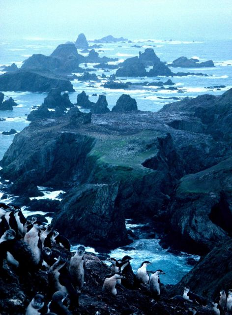 Overlooking a penguin colony on the rocky coast of Seal Island. Picture